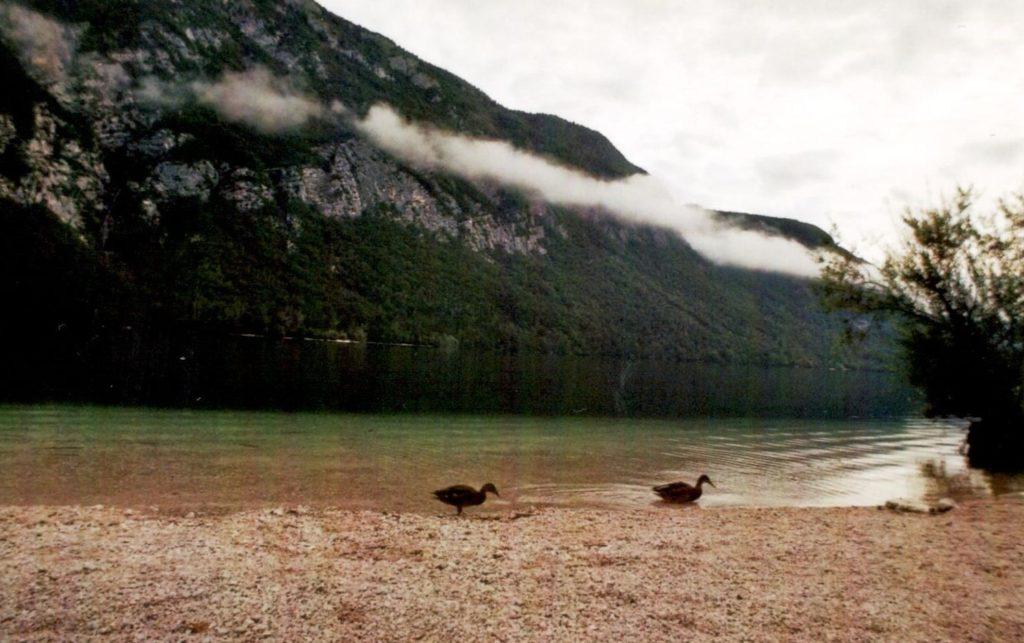 Analog Film Slowenien Bohinji See Enten Natur